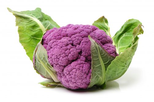Purple Cauliflower isolate on white background